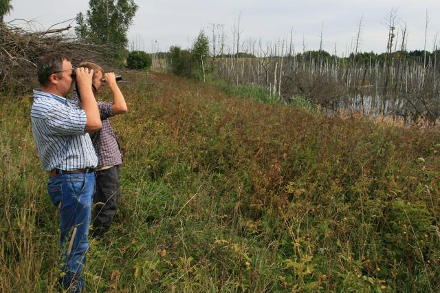 """Gamtininkai tęsia elektros tilto """"LitPol Link"""" statybų teritorijos ekologinę stebėseną"""
