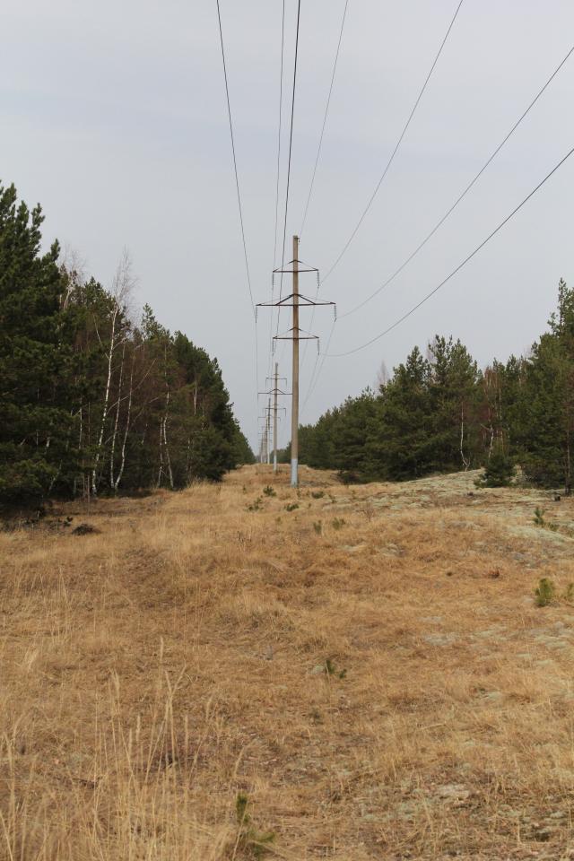 Bus remontuojama Neringai elektros tiekimą užtikrinanti linija